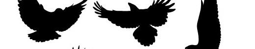 Free Vectors : Birds in Flight