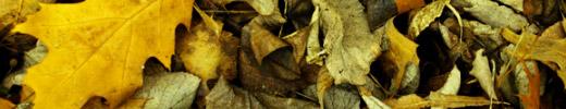 Free Hi- Res Textures - Nature Set