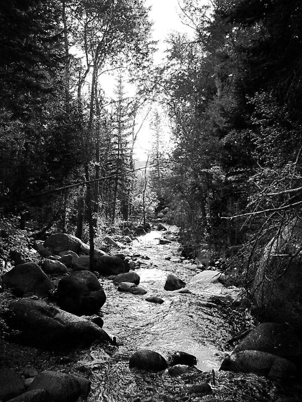 Black White Stream Trees Photo