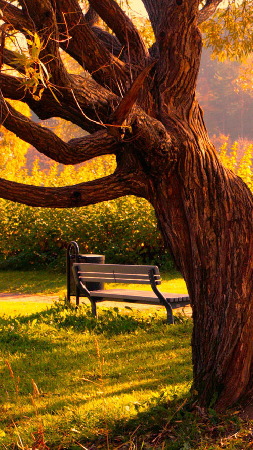 The bench in the park wallpaper