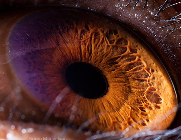 Chimpanzee eye photo