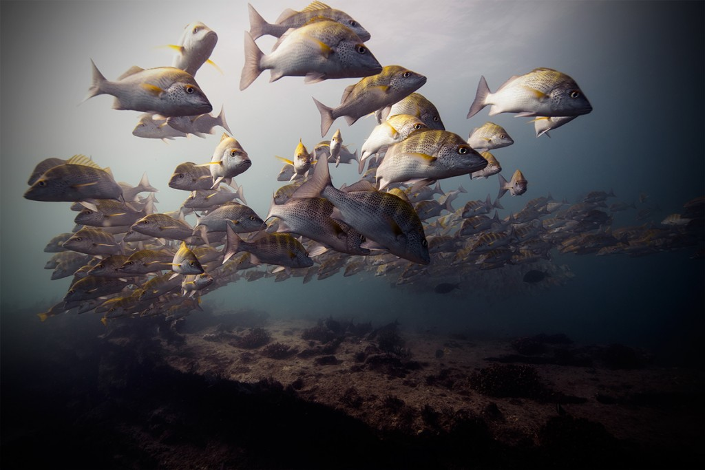 Daily Inspiration: Underwater Photography That Will Make you Speechless