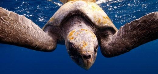 di-underwater