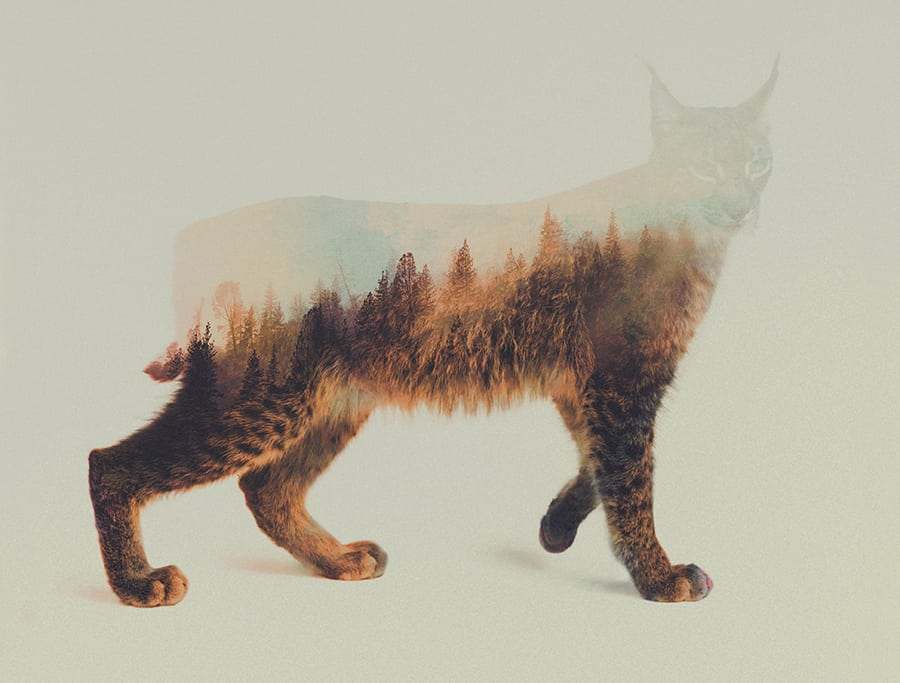 Stunning Double Exposure of Animals by Andreas Lie