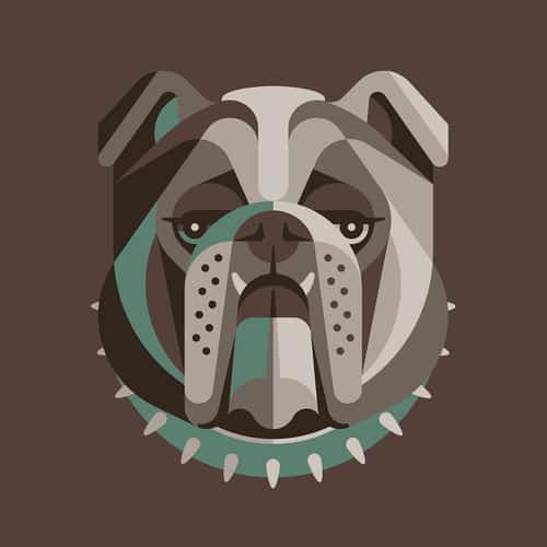 English Bulldog Illustration