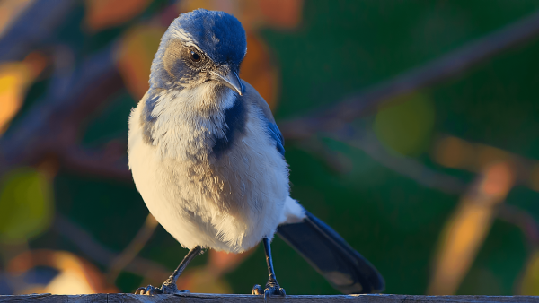 little spring bird