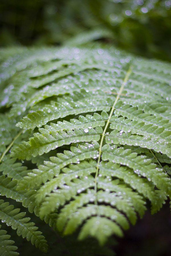leaf on the rain