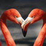 Flamingo heart