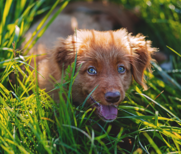 friendly pup in the grass