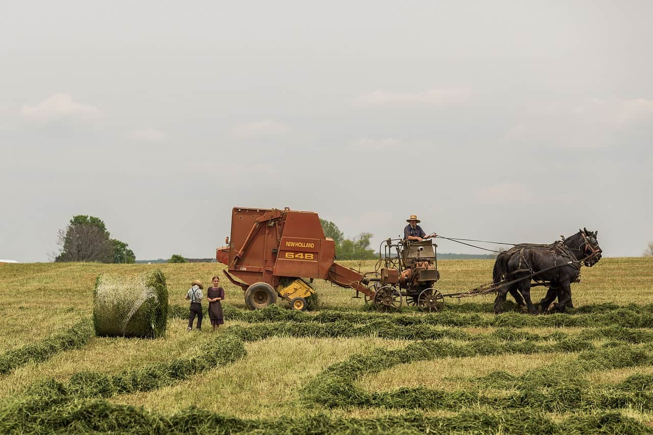 people working on the farm