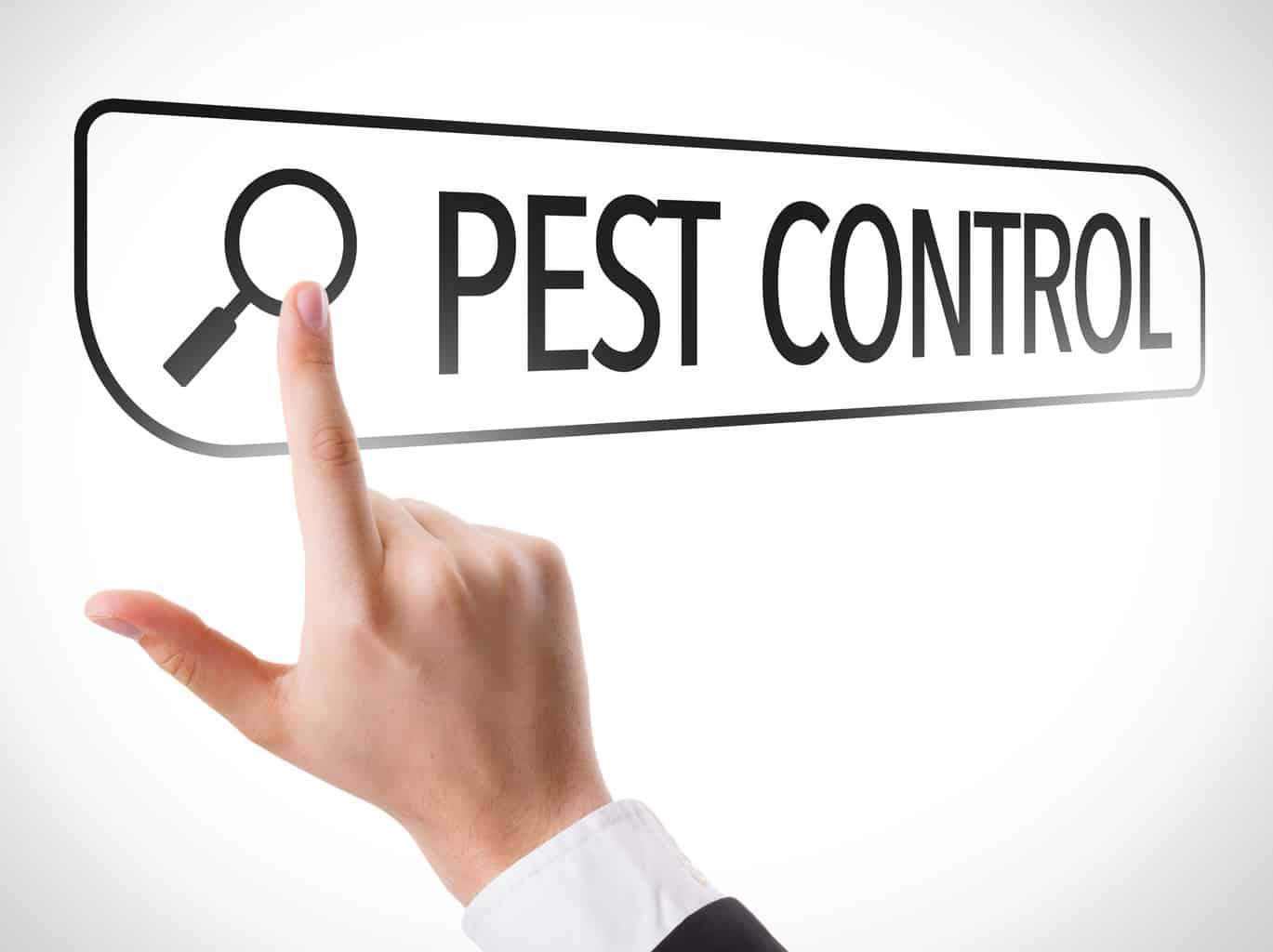 Pest Control written in search bar on virtual screen